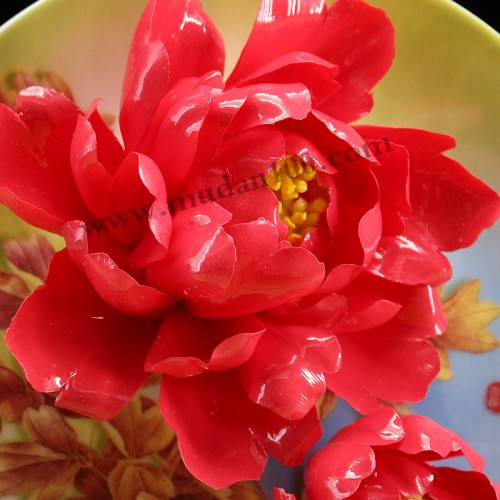 娇红牡丹瓷细节